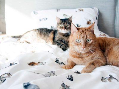 pościel-koty---MUMLA